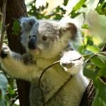 【職業旅人仲間レポート】オーストラリア人も大絶賛 美しい街パース旅行おすすめの過ごし方