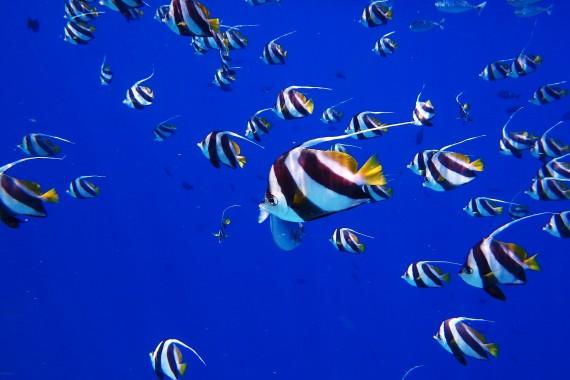 fish-2733323_1920