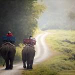 【職業旅人仲間レポート】アジアの穴場国!ラオス ルアンパバーン旅行のおすすめポイントをご紹介
