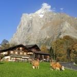 【職業旅人仲間レポート】スイスのグリンデルワルト ハイジと楽しむ旅行 おすすめの過ごし方