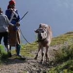 【職業旅人】ネパールはポカラ!おすすめポカラの観光スポットを紹介します!